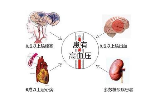 血压高伤害哪些器官