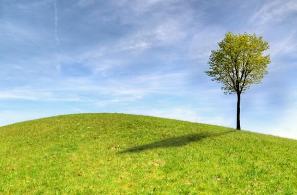 2021年植树节
