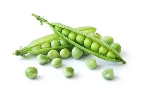 豌豆降血压