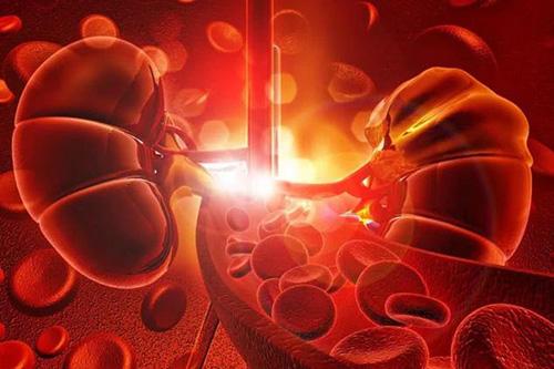 高血压损害肾脏